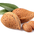 uploads almond almond PNG14 23