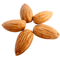 uploads almond almond PNG26 7