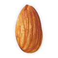 uploads almond almond PNG42 20