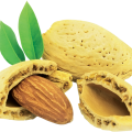 uploads almond almond PNG5 15