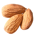 uploads almond almond PNG55 10
