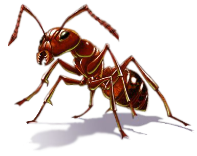 uploads ant ant PNG19349 3