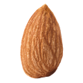 uploads almond almond PNG39 14