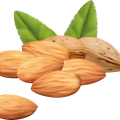 uploads almond almond PNG66 10