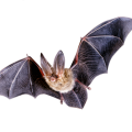 uploads bat bat PNG15 18