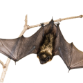 uploads bat bat PNG21 18