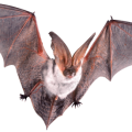 uploads bat bat PNG29 76