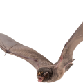 uploads bat bat PNG3 19