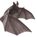 uploads bat bat PNG34 20