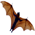 uploads bat bat PNG40 56