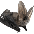 uploads bat bat PNG45 76
