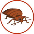 uploads bed bug bed bug PNG32 6