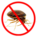 uploads bed bug bed bug PNG37 18