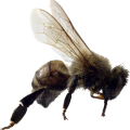 uploads bee bee PNG1 20
