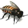 uploads bee bee PNG12 6