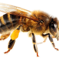 uploads bee bee PNG16 56