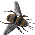 uploads bee bee PNG3 17