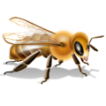 uploads bee bee PNG8 19