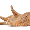 uploads cat cat PNG93 16