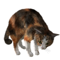 uploads cat cat PNG95 16
