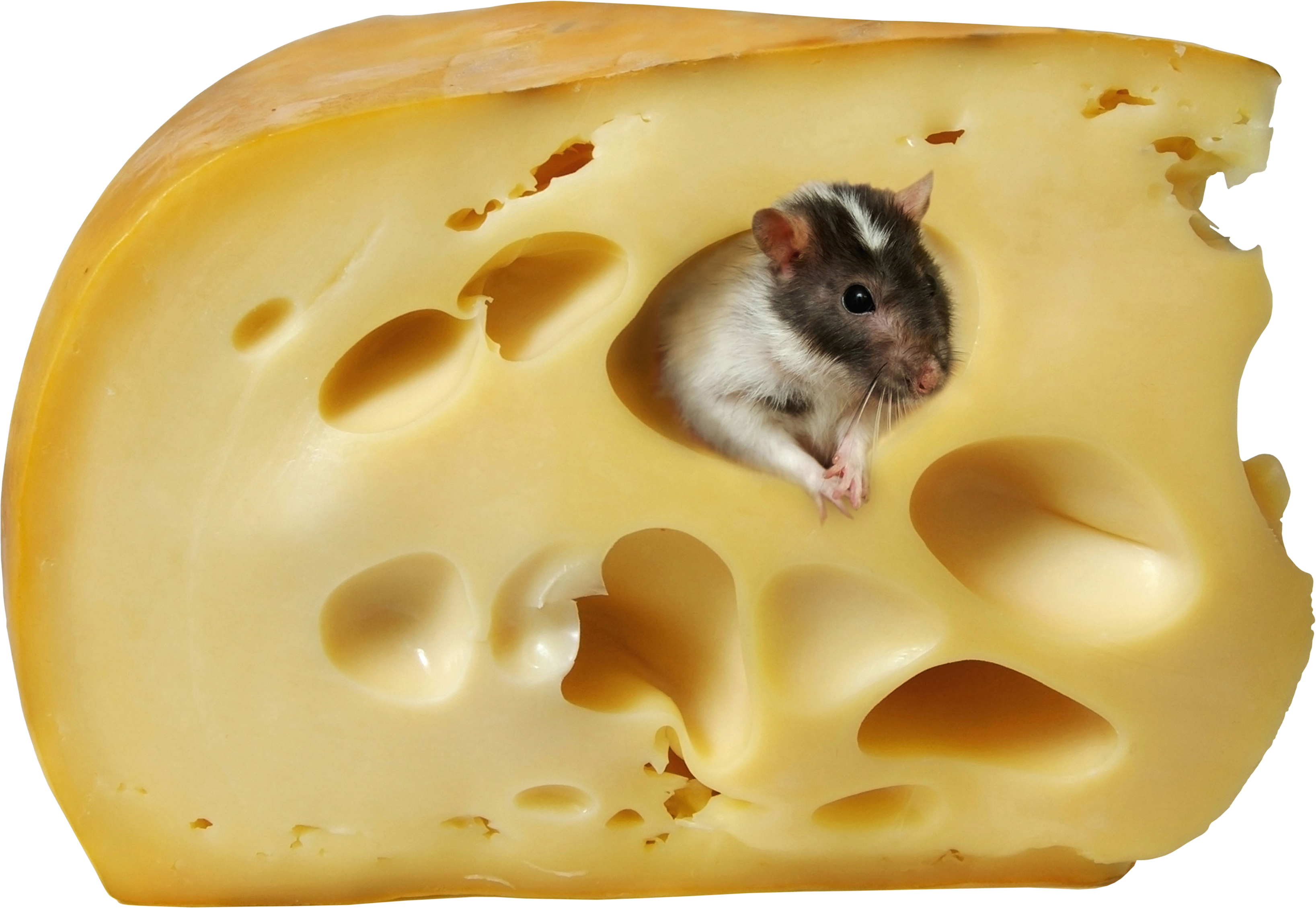 uploads cheese cheese PNG25278 25