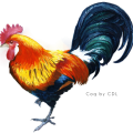 uploads cock cock PNG39 18