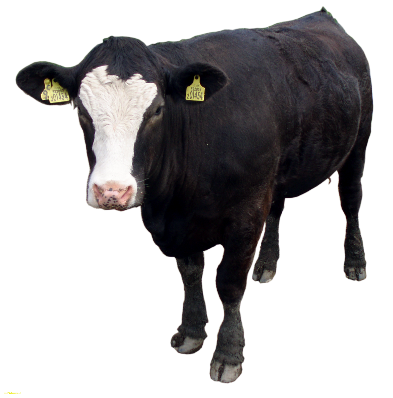 uploads cow cow PNG50600 24