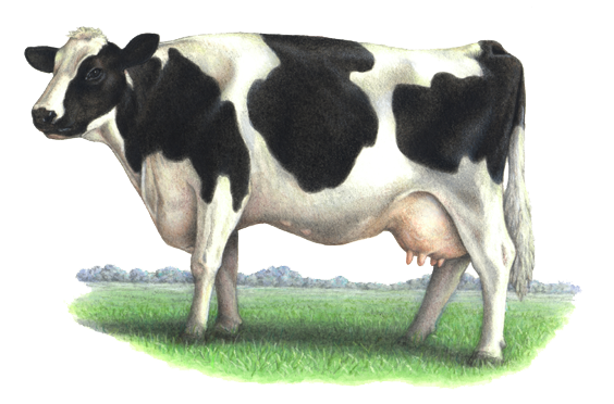 uploads cow cow PNG50618 24