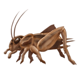 uploads cricket insect cricket insect PNG3 24