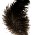 uploads feather feather PNG12950 8