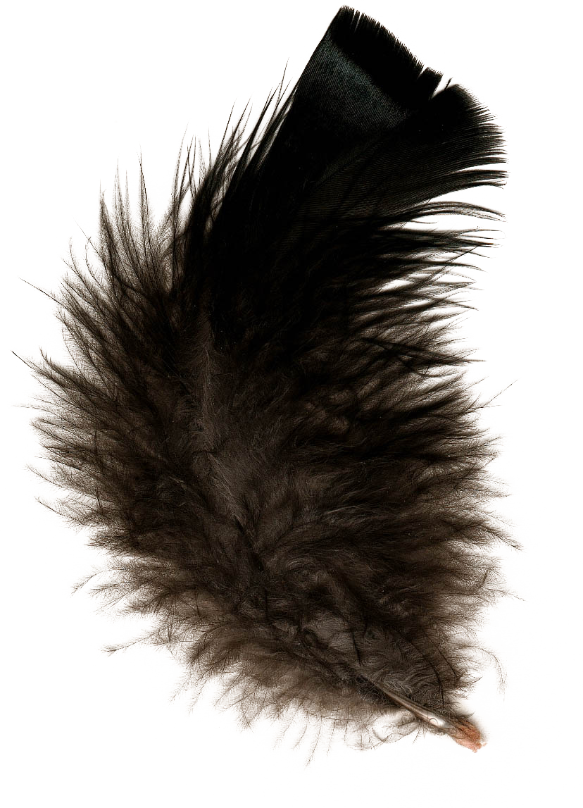 uploads feather feather PNG12950 3