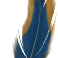 uploads feather feather PNG12952 6