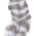 uploads feather feather PNG12953 20