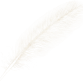 uploads feather feather PNG12954 4