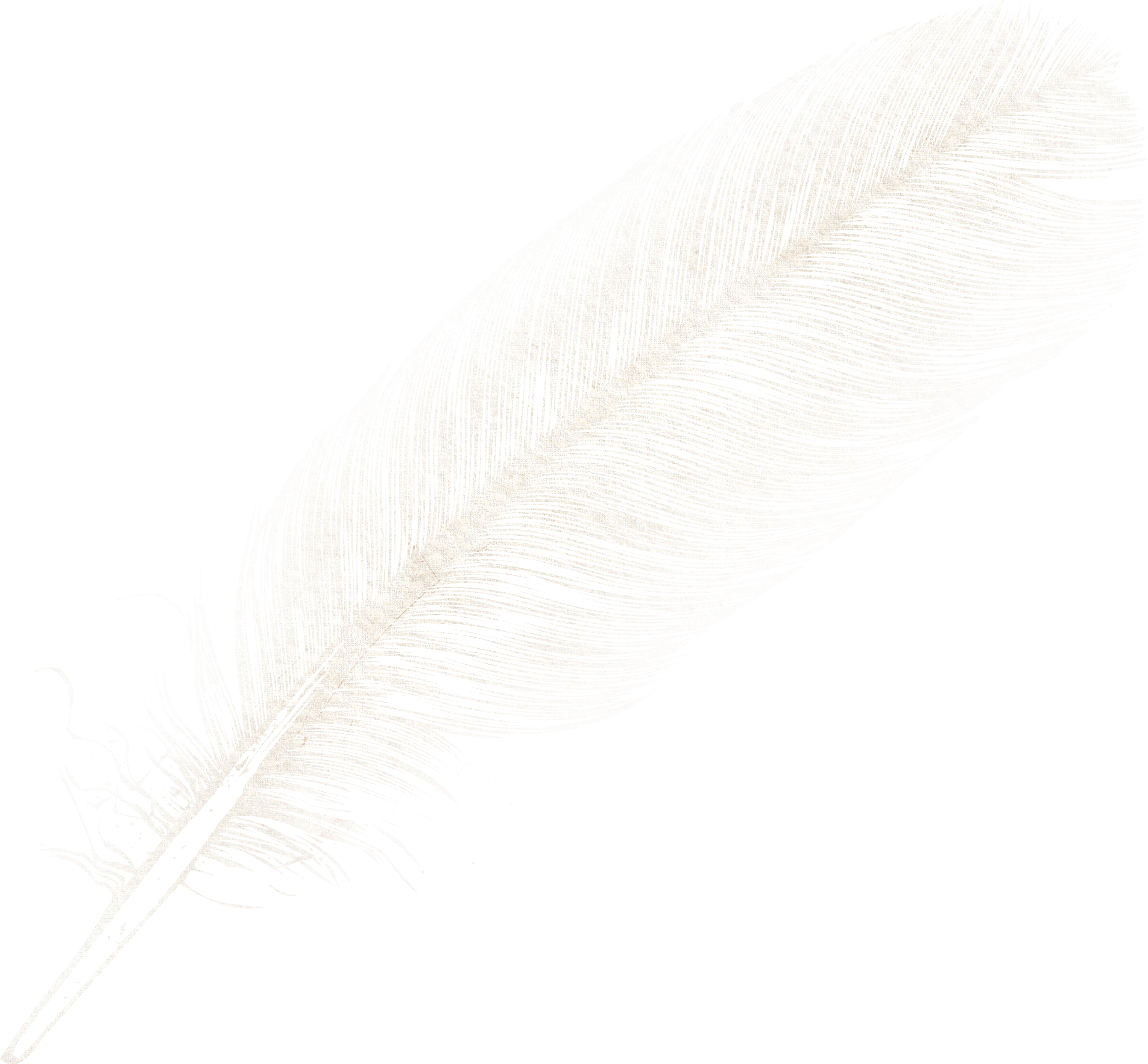 uploads feather feather PNG12954 24