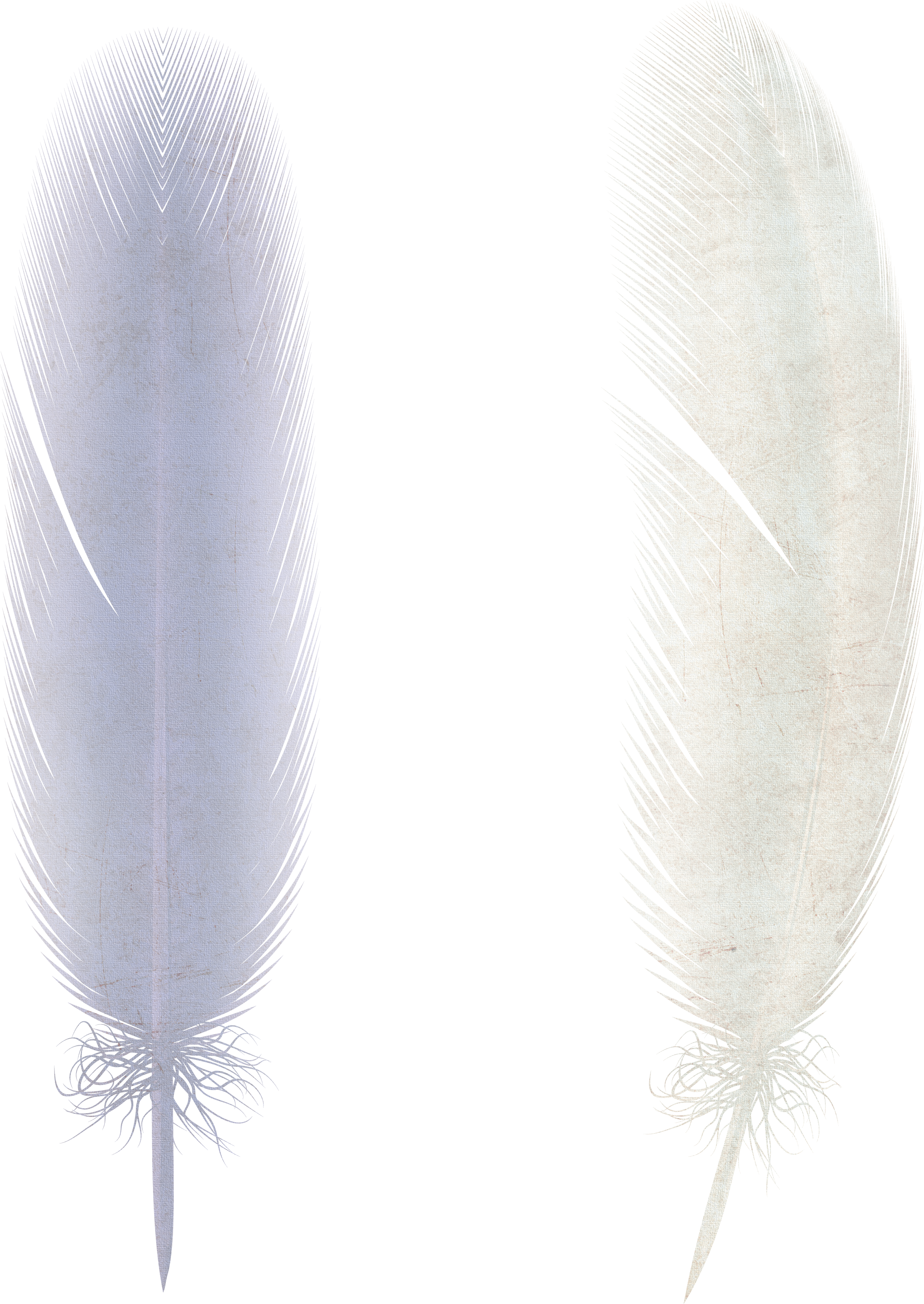 uploads feather feather PNG12955 3