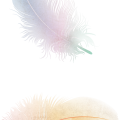 uploads feather feather PNG12956 21