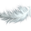 uploads feather feather PNG12958 12