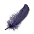 uploads feather feather PNG12959 14
