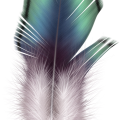 uploads feather feather PNG12963 21