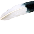 uploads feather feather PNG12965 14