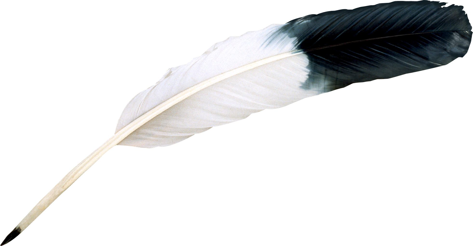 uploads feather feather PNG12965 3