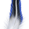 uploads feather feather PNG12966 7