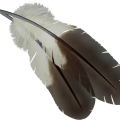 uploads feather feather PNG12969 18