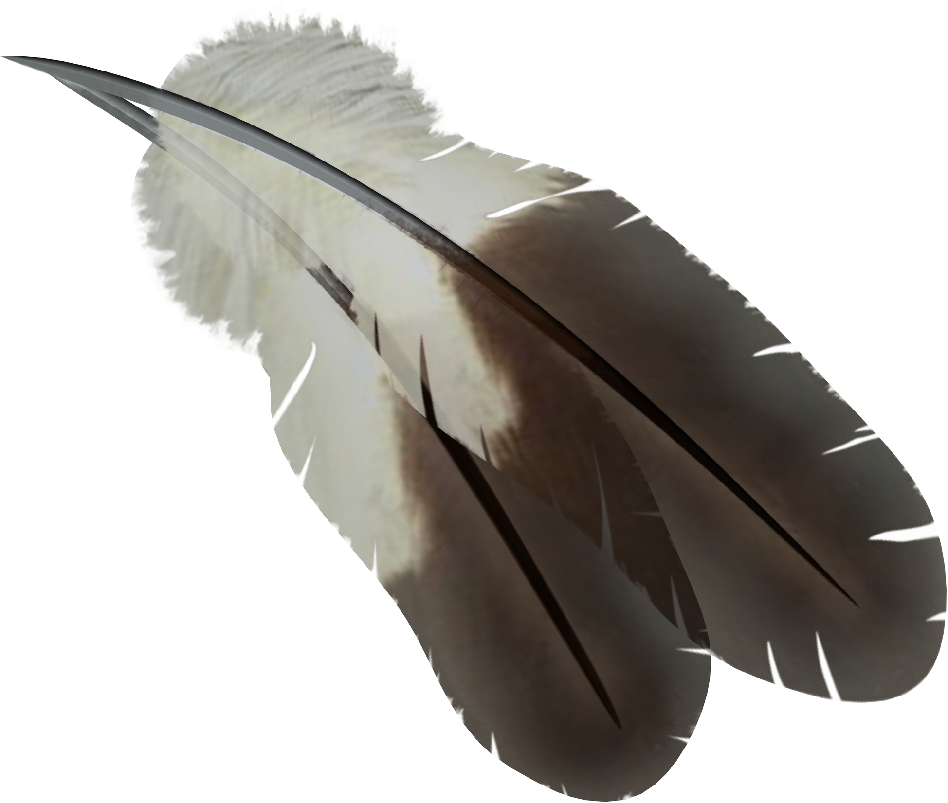 uploads feather feather PNG12969 3