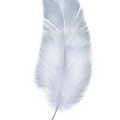uploads feather feather PNG12971 13