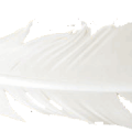uploads feather feather PNG12972 10