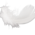 uploads feather feather PNG12975 10