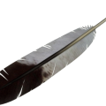 uploads feather feather PNG12977 25