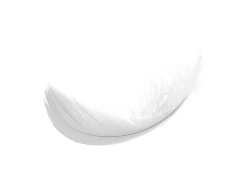 uploads feather feather PNG12978 3